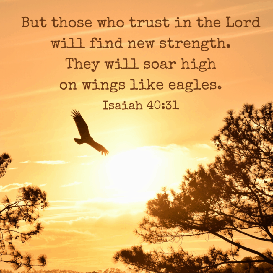 But those who trust in the Lord will find new strength. They will soar high on wings like eagles. -Isaiah 40:31 (NLT)