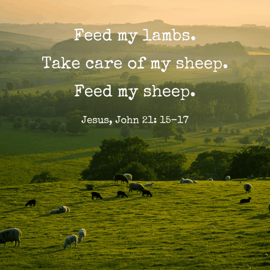Feed my lambs. Take care of my sheep. Feed my sheep. Jesus, John 21:15-17 (NLT)
